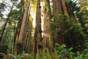 redwoodnpjessicawatzsmall